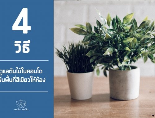 4 วิธีดูแลต้นไม้ในคอนโด เพิ่มพื้นที่สีเขียวให้ห้อง